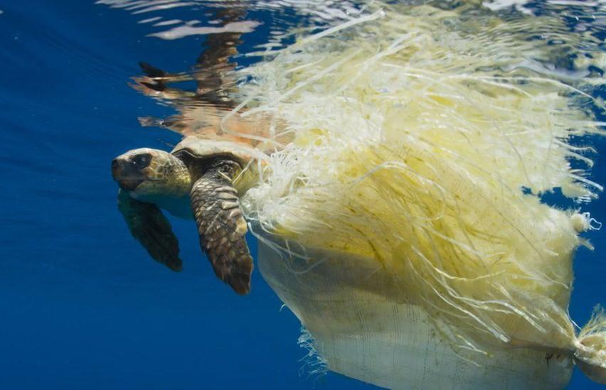 Mais de mil tartarugas marinhas morrem enredadas no nosso lixo plástico todos os anos