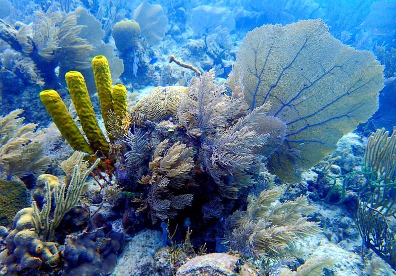 Belize proíbe exploração de petróleo no mar para proteger o seu recife de coral