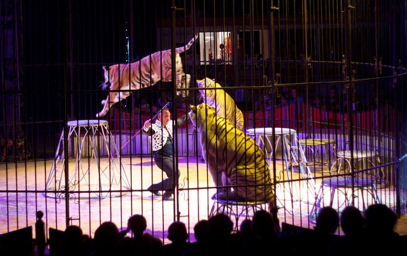 Iznalloz (Granada) proíbe os circos com animais selvagens graças a uma criança