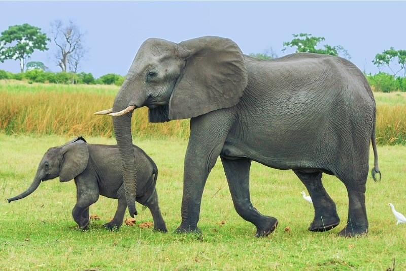 A partir de agora, comprar marfim na China é ilegal