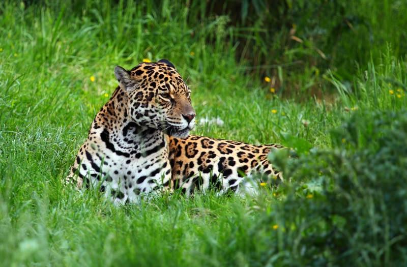 Peru: Novo parque nacional vai proteger mais de 800 mil hectares de floresta amazónica