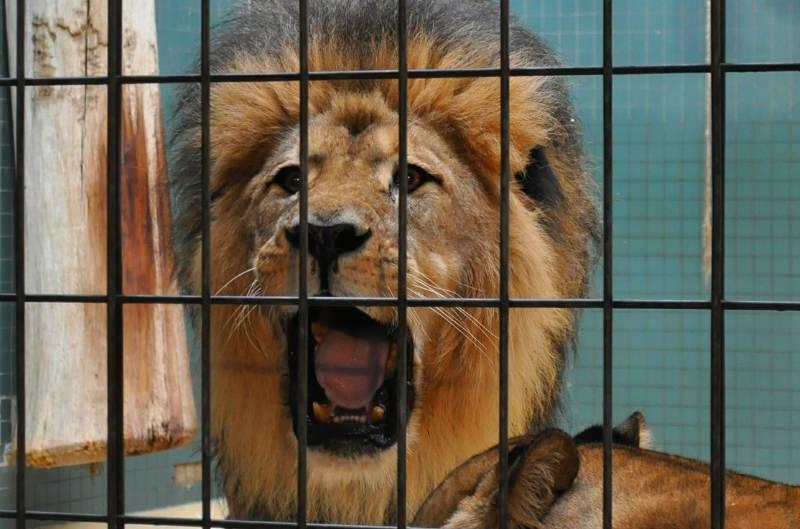 Portland proíbe os circos com animais selvagens e exóticos