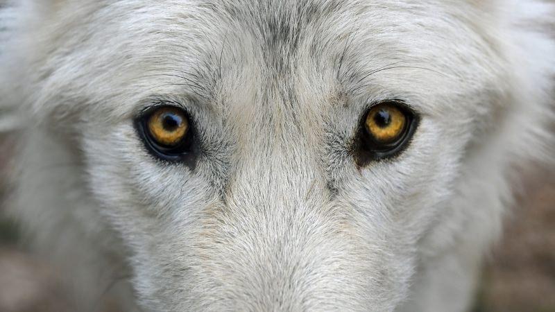Tememo-los, mas predadores e necrófagos são nossos aliados no controlo de doenças e na agricultura