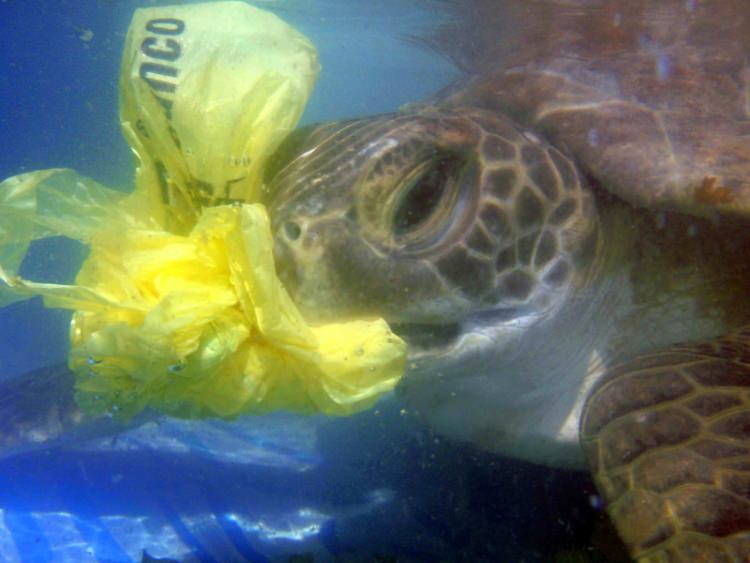 Goa vai proibir os sacos de plástico a partir de maio