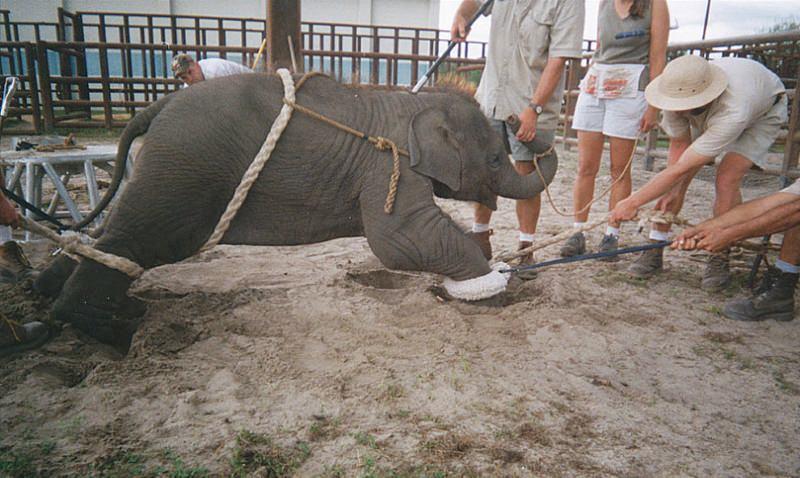 Circos, paradas e outros espetáculos proibidos de usar elefantes em Nova Iorque