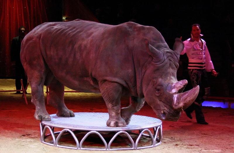 Assembleia Municipal de Loures aprovou fim do uso de animais em circos