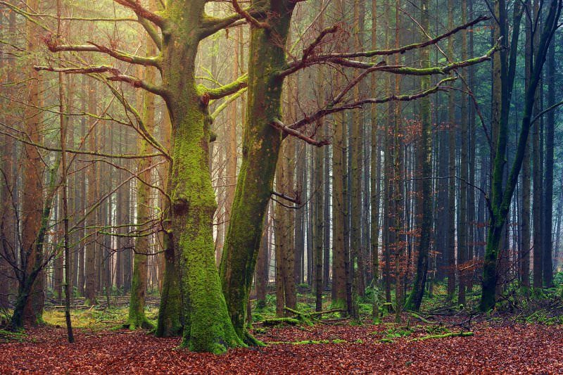 Contacto com a natureza promove imagem mais positiva do corpo, diz estudo