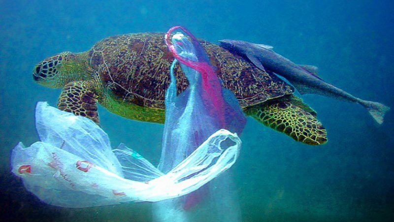 Taiwan vai proibir sacos, copos, palhinhas e outros artigos descartáveis de plástico