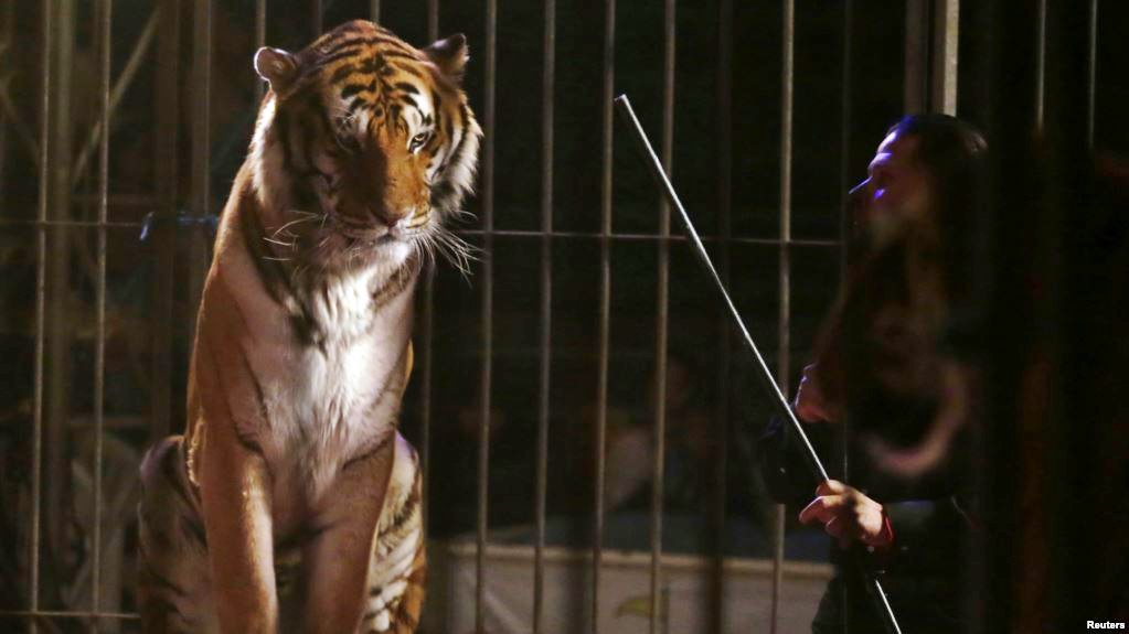 Inglaterra vai proibir os circos com animais selvagens