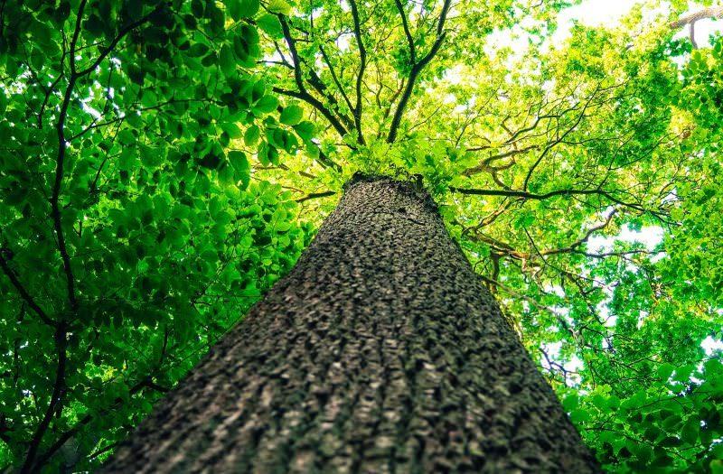 Após séculos de má gestão, estamos finalmente a plantar e a dar valor às árvores no mundo