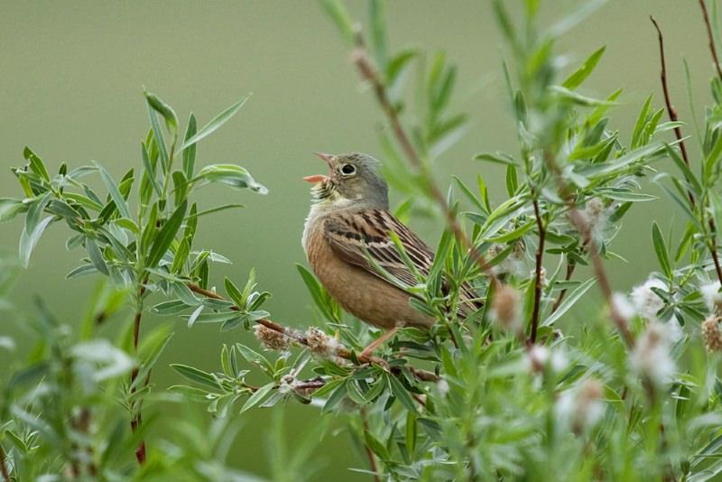 """""""É uma catástrofe"""": populações de aves em França colapsam devido ao uso de pesticidas"""