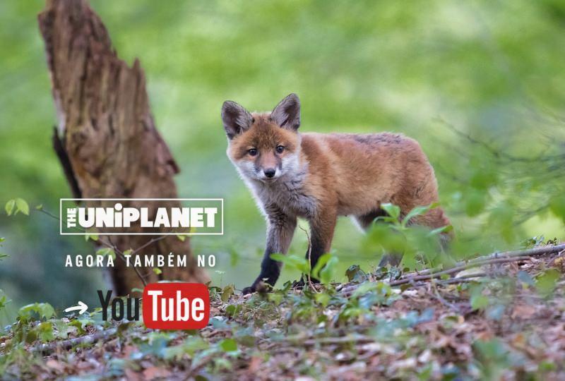O UniPlanet já tem um canal no YouTube