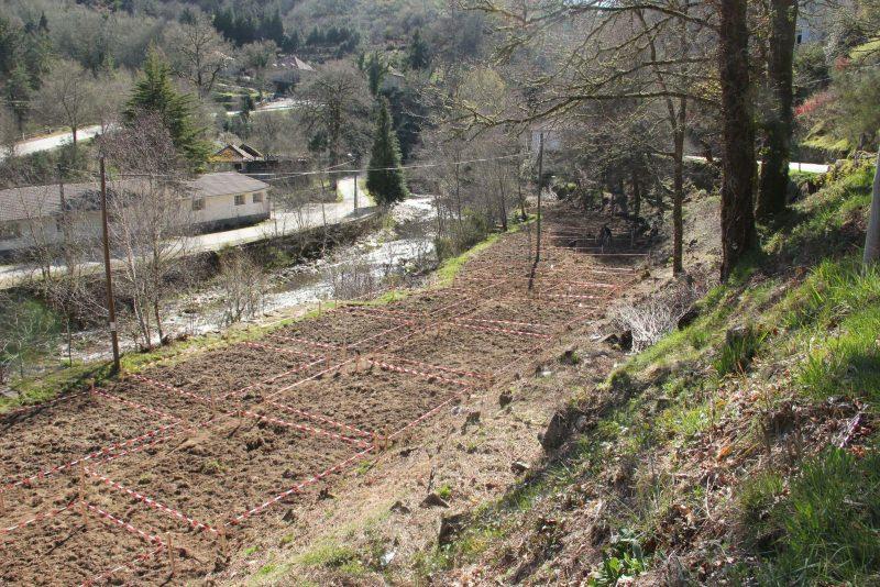 Católica no Porto propõe aplicação de plantas para recuperar solos contaminados