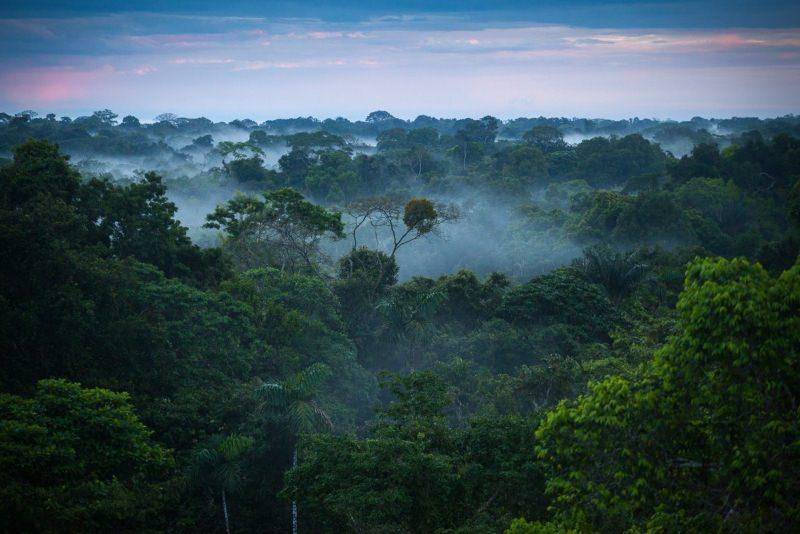 Impacto dos seres humanos nas florestas continua evidente passados 500 anos