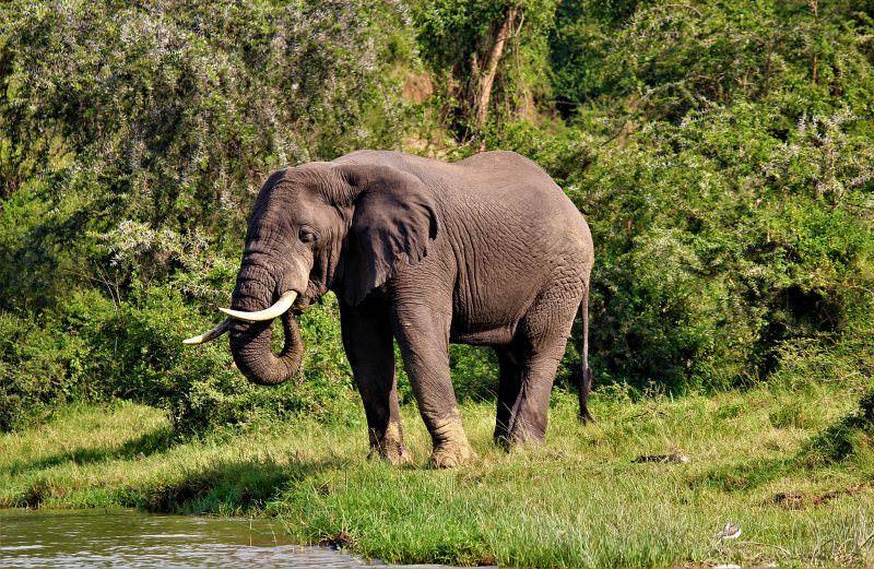 """Reino Unido vai impor uma das proibições do comércio de marfim """"mais rigorosas do mundo"""""""