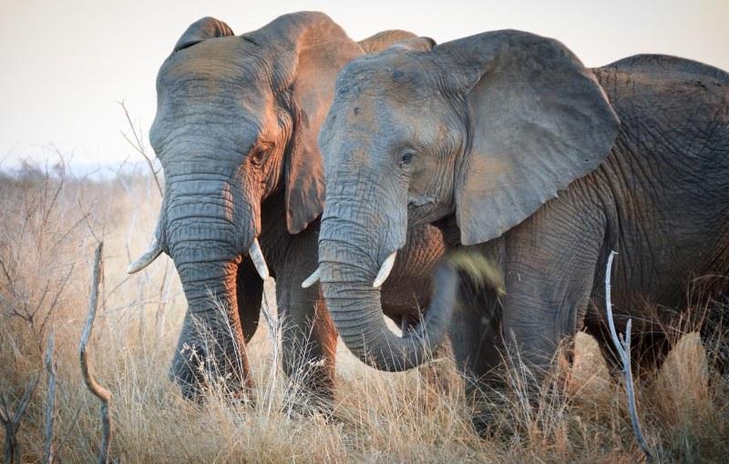 Taiwan vai proibir o comércio de marfim até 2020