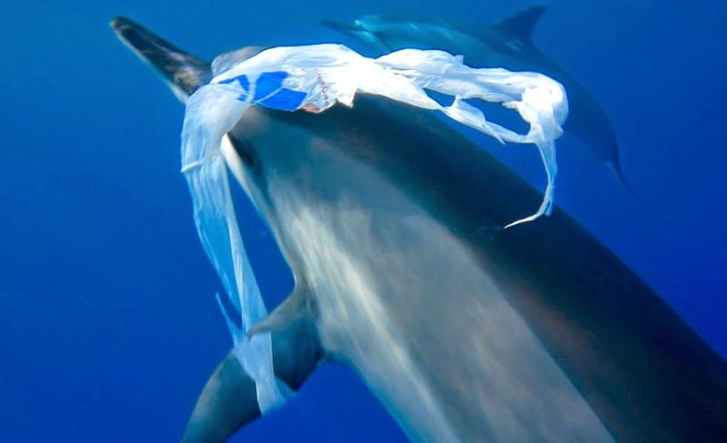 Ibiza, Maiorca e Minorca vão proibir cápsulas de café e produtos descartáveis de plástico