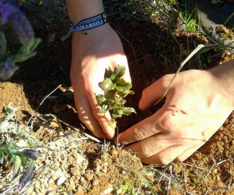 Quercus planta 200 sobreiros para compensar emissões de carbono do Salva a Terra