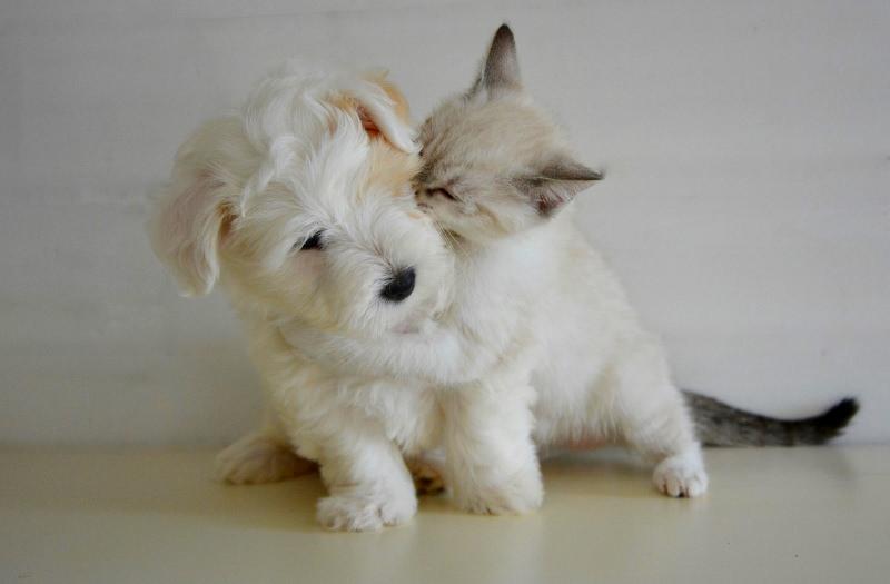 Maryland, EUA, proíbe venda de cães e gatos em lojas de animais
