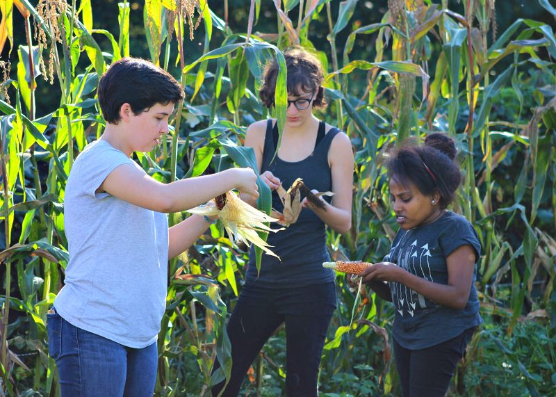 A escola secundária onde aprender agricultura biológica é um requisito