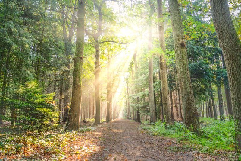 Viver perto de uma floresta faz bem ao cérebro e ajuda a lidar com o stress