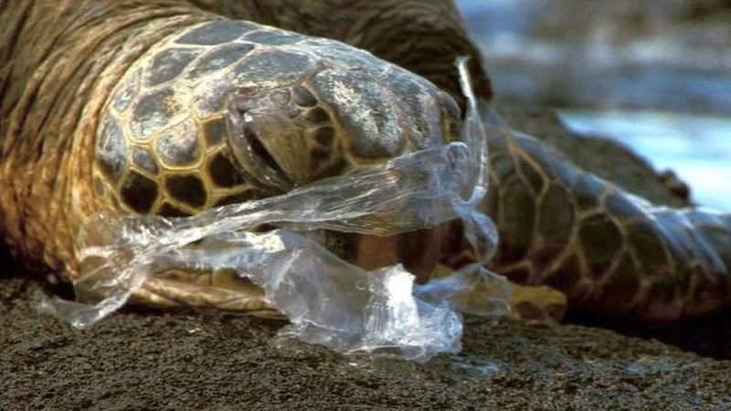 Tartaruga com plástico