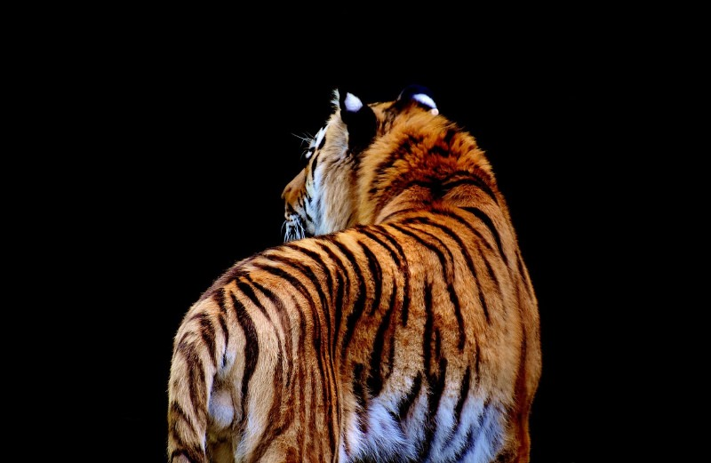 Somos apenas 0,01% de toda a vida, mas já destruímos 83% dos mamíferos selvagens
