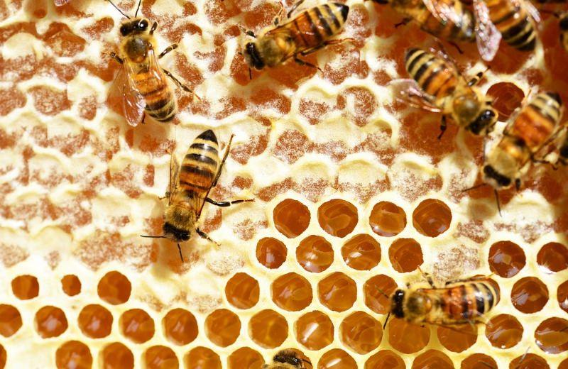 Apicultores franceses movem ação contra Bayer após descoberta de glifosato no mel