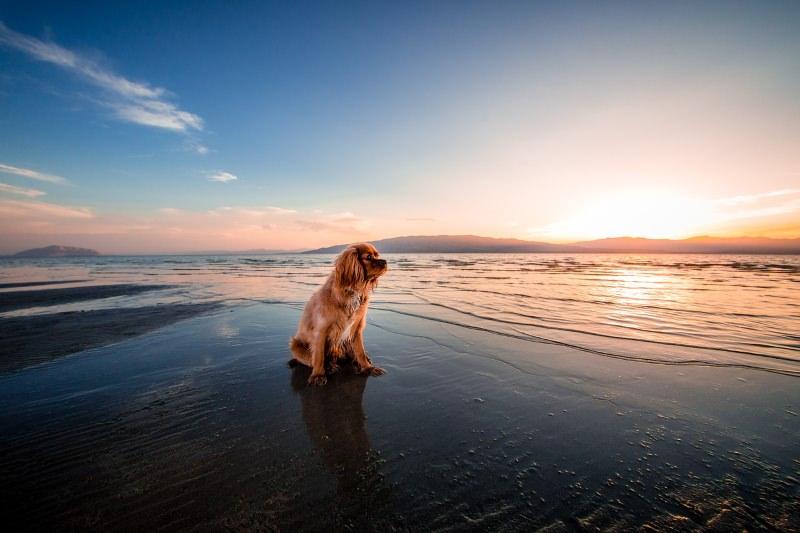 Esposende vai ter duas praias para cães
