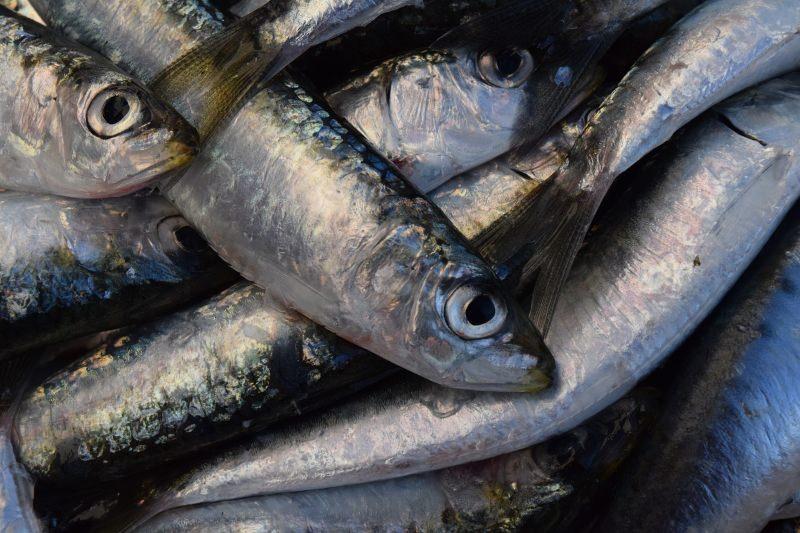 Mais de um terço do peixe capturado é desperdiçado – relatório da FAO