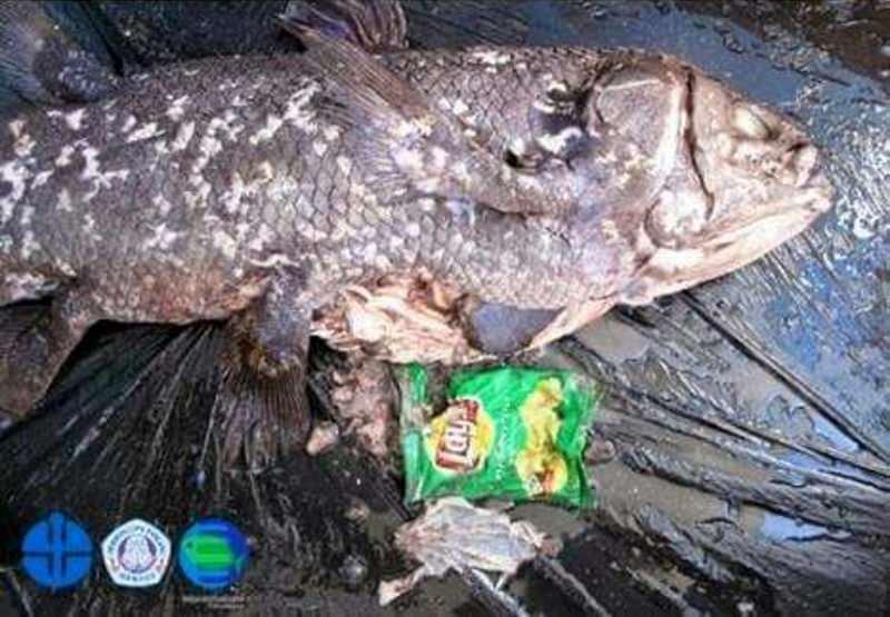 """Nem os """"fósseis vivos"""" dos oceanos escapam ao nosso lixo plástico"""