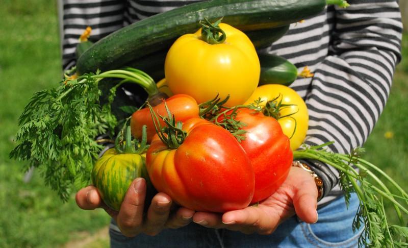 Calendário da Horta: as frutas e os legumes que deve plantar em cada mês