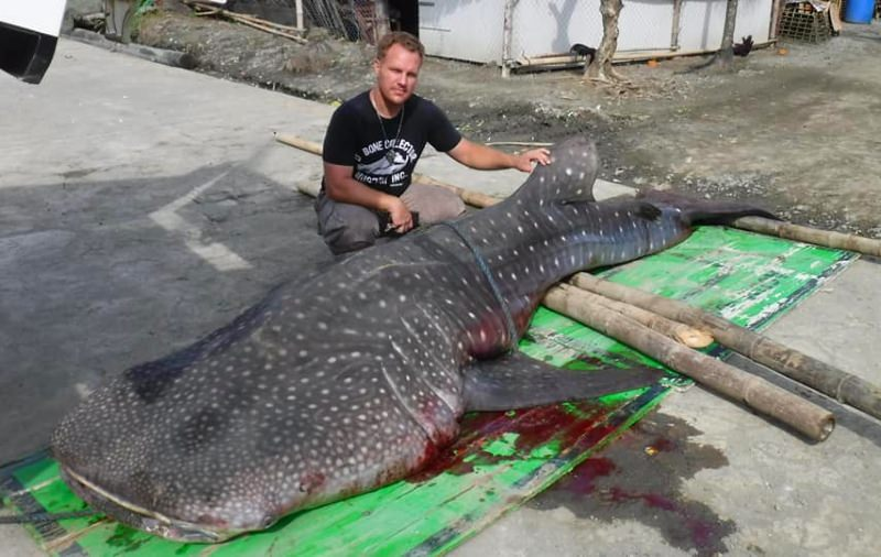 Tubarão-baleia dá à costa morto com embalagens de plástico no estômago