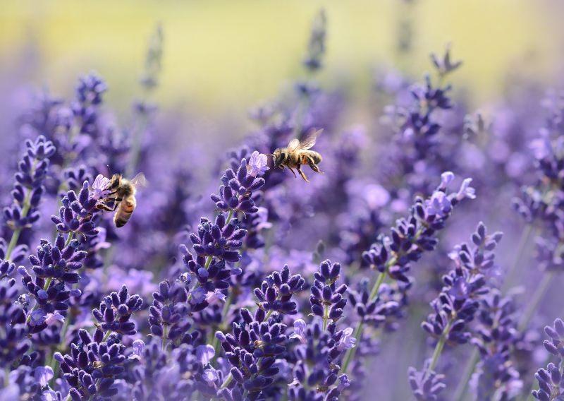 França torna-se o 1º país da Europa a proibir 5 inseticidas perigosos para abelhas