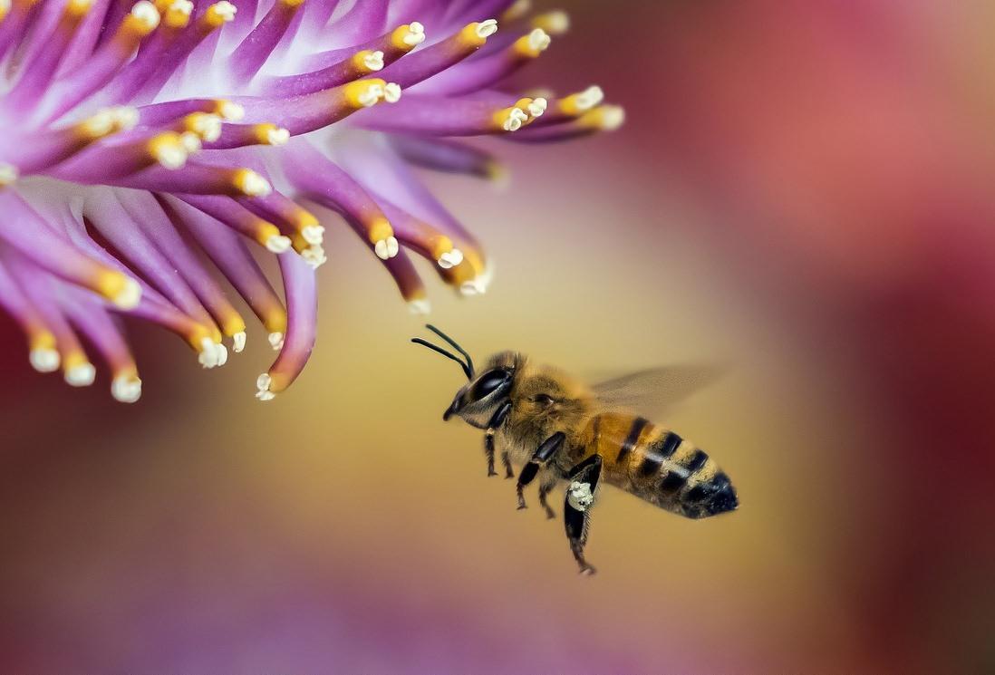 O glifosato da Monsanto prejudica as abelhas, avisa um novo estudo