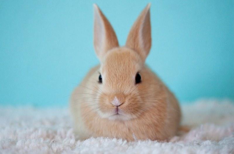 Califórnia proíbe venda de cosméticos testados em animais