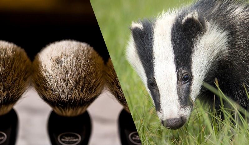 P&G deixa de usar pelo de texugo nos pincéis de barbear após investigação da PETA
