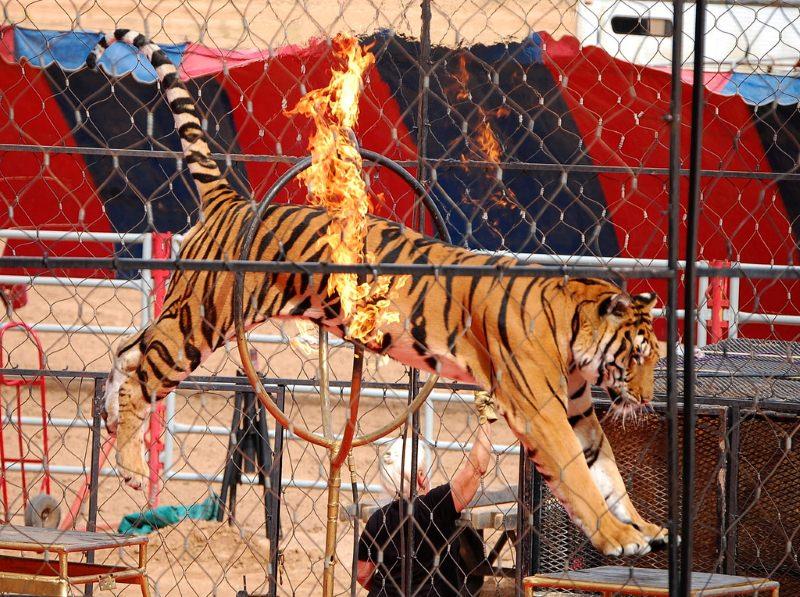 Portugal proíbe o uso de animais selvagens nos circos