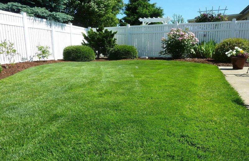 Para proteger os polinizadores, não deixe o seu quintal demasiado ordenado e limpo