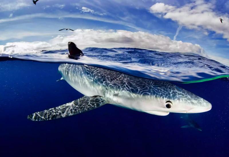 Maior grupo de restaurantes de Hong Kong vai deixar de servir barbatana de tubarão em 2020