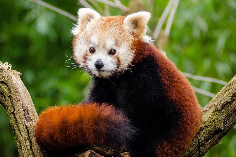 Animais não conseguem evoluir suficientemente rápido para escapar à crise de extinções