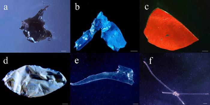 Fragmentos de plástico encontrados nos estômagos de peixes