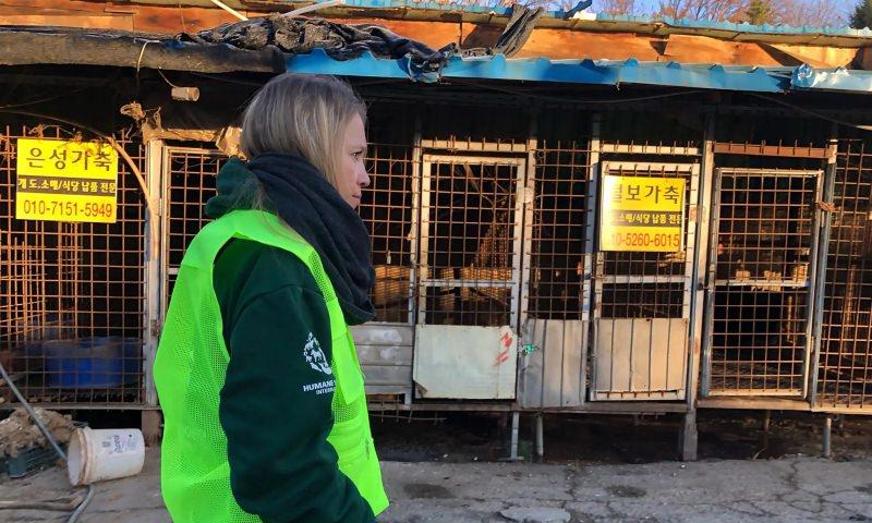 Coreia do Sul fecha o maior matadouro de cães do país