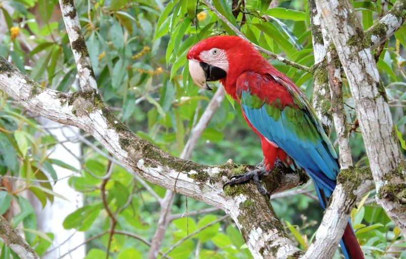 Indígenas da Amazónia pedem maior reserva do mundo com 200 milhões de hectares