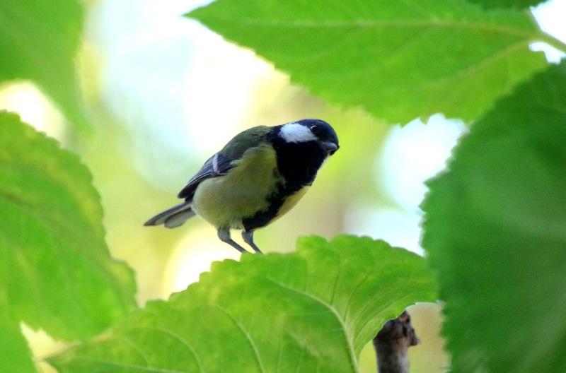 """Plantar espécies exóticas nos jardins cria """"desertos alimentares"""" para aves e insetos"""