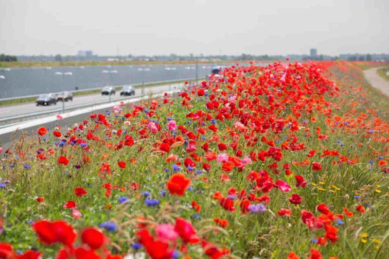 Flores silvestres na autoestrada