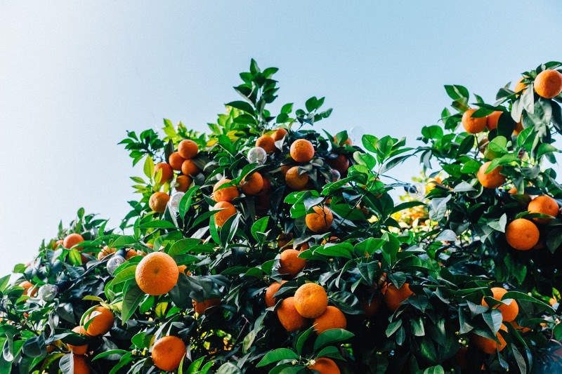 Em Portugal, 50% dos produtos biológicos consumidos são importados