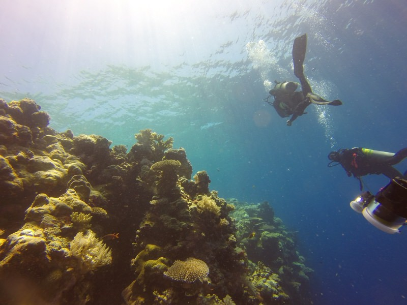 Palau vai proibir o uso de protetores solares para proteger os corais