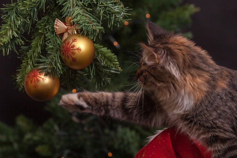 Os pinheiros de Natal de plástico podem ser colocados no ecoponto amarelo?