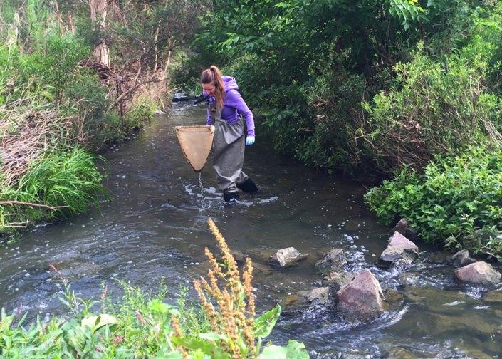 Erinn Richmond recolhe invertebrados aquáticos num ribeiro